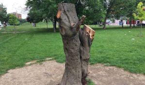 FOTO: Tajna da li su izrečene kazne za sečenje drveta na Novom naselju, komunalna policija ćuti