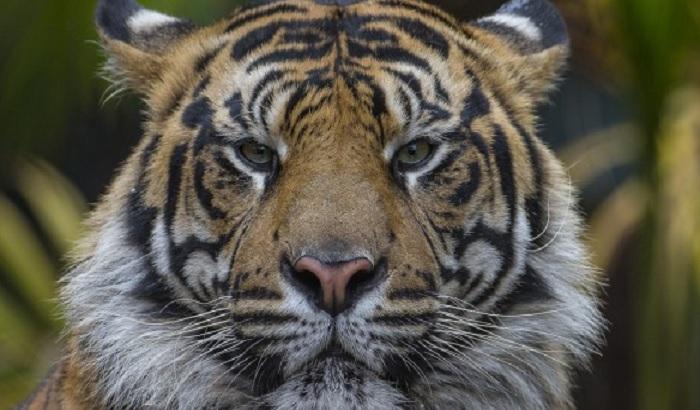 Radnica zoološkog vrta poginula u incidentu s tigrom