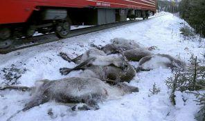 Vozovi pregazili više od 100 irvasa u samo nekoliko dana