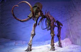 Kostur mamuta star 15.000 godina uskoro na aukciji