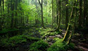 Protesti zbog divlje seče poslednje evropske prašume u Poljskoj