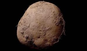 FOTO: Za fotografiju krompira dao milion evra