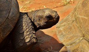 Odbegla kornjača nađena 150 metara od zoo vrta