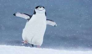 Lekari savetuju građanima da na ledu hodaju kao pingvini