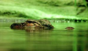 Krokodil usmrtio sveštenika tokom krštenja na jezeru