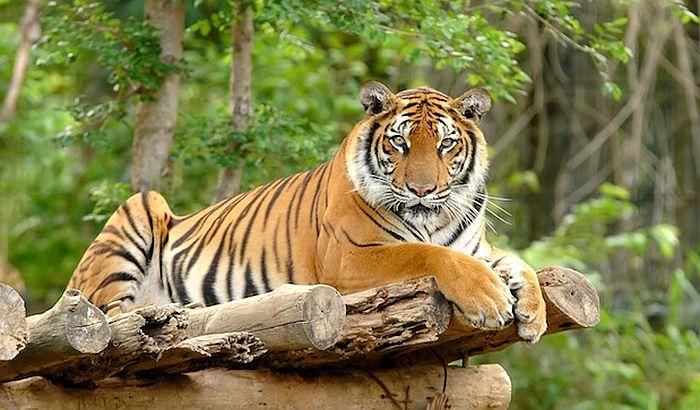U zatvor za držanje lavova i tigrova kao ljubimaca