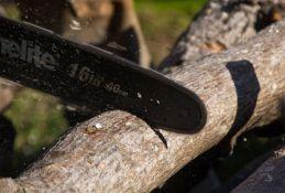 Zrenjanin: Seku drveće da naprave parking ili letnju baštu