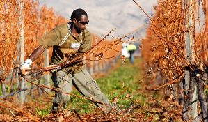 Premijer Novog Zelanda: Uvozimo radnike jer se naši drogiraju