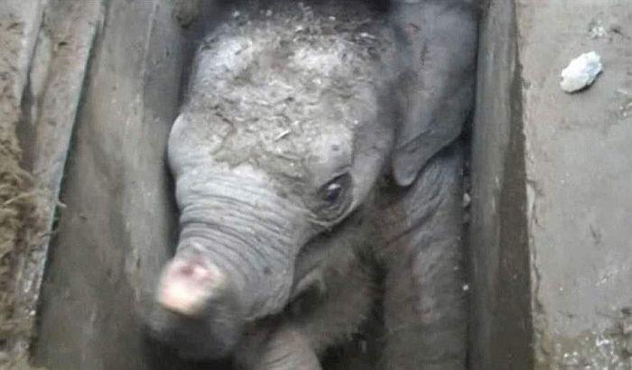 VIDEO: Slonče upalo u šaht