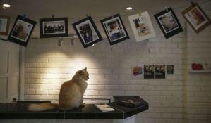 FOTO: Hotel namenjen mačkama u Kuala Lumpuru