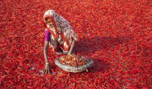 FOTO: Za dnevnicu manju od dolara žene suše najljuću čili papričicu na svetu