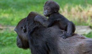 Primatima preti izumiranje