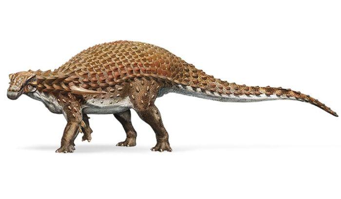 FOTO: Izložen veoma redak i veoma očuvan fosil dinosaurusa