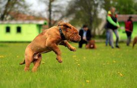 Pravila ponašanja u parkovima za pse