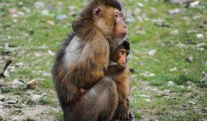 Majmuni, ptice i krokodili žrtve šverca životinja