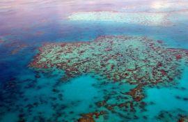 Morske zvezde proždiru Veliki koralni greben