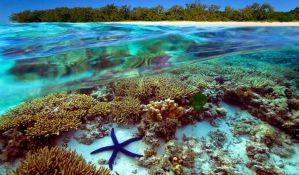 VIDEO: Džinovski puževi bi mogli biti spas za Veliki koralni greben