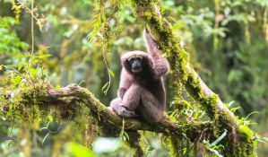 Pronađena nova vrsta majmuna, dobila ime po Luku Skajvokeru