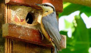 Ptice hraniti sa bezbedne razdaljine