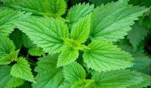 Aktivno šest alergenih biljaka