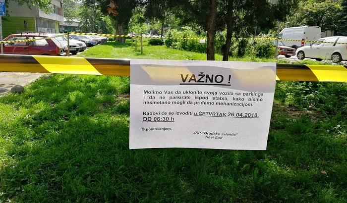 FOTO: Veliki platan na Grbavici neće biti posečen