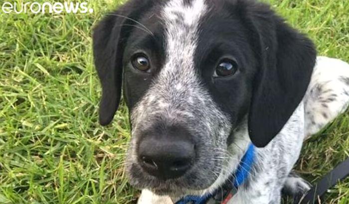 Pas iz obezbeđenja aerodroma ubijen jer je trčao po pisti
