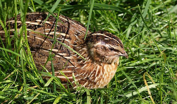 Niko ne odgovara za ubijanje divljih ptica