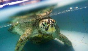 Uginula kornjača koja je progutala hiljadu kovanica