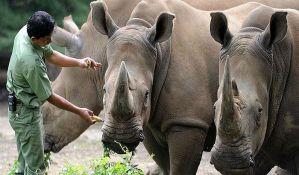 Češki zoo safari preventivno seče nosorozima rogove