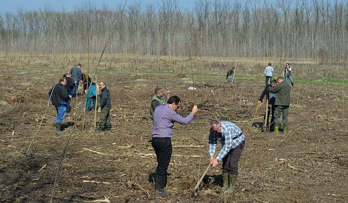 Kaćka šuma bogatija za 200 sadnica topole