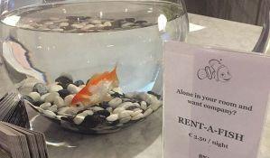 Hotel usamljenim gostima iznajmljuje zlatnu ribicu