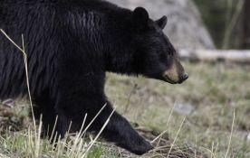 Čovek napao medveda kako bi spasao svog psa