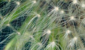 Aplikacija koja pomaže alergičnima na polen