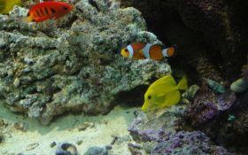 Sudija na Havajima zabranio hvatanje ribica za akvarijume