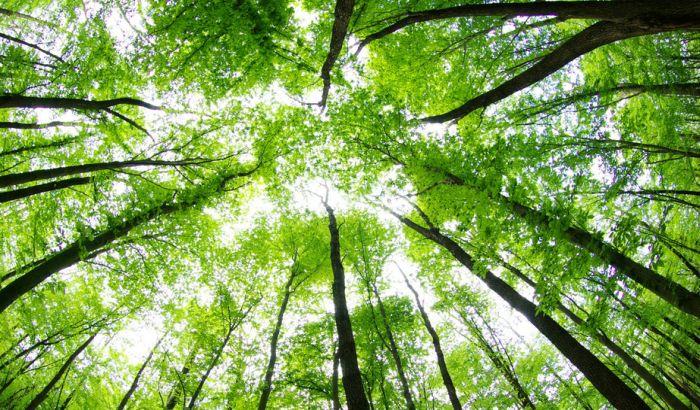 VIDEO: Prvi put pronađen dokaz da drveće spava