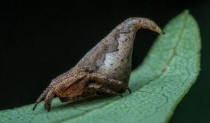 Nova vrsta pauka dobila ime po liku iz Harija Potera