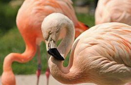Flamingosi usred zime na jezeru u Turskoj