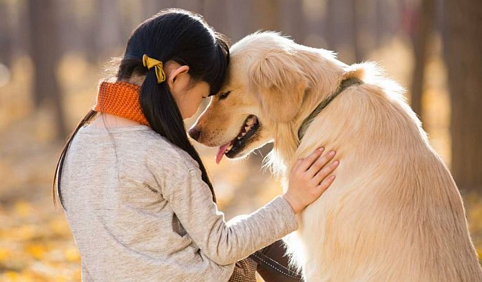 Psi više vole maženje od pohvala