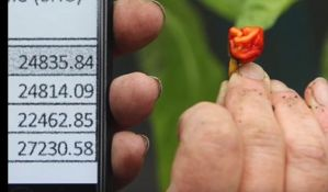 VIDEO: Tvrdi da pravi ljute papričice koje ubijaju