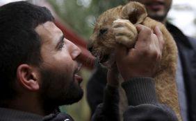 VIDEO: Zoo-vrt u Gazi prodaje laviće koje ne može da hrani
