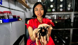 VIDEO: Živi sa 1.500 tarantula
