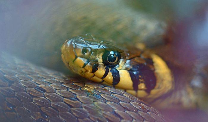 Lekarka upozorava: Decu leče zmijskim otrovom