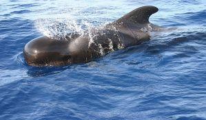 Više od 150 kitova nasukalo se na obali Australije