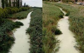 Ekolozi: Vital ponovo izručio otpadne vode u Veliki bački kanal