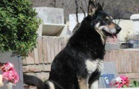 Slep i hrom pas ni posle 10 godina ne napušta grob vlasnika