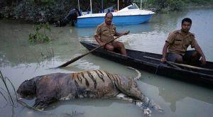U poplavi u parku prirode u Indiji stradalo 225 životinja