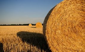 Država gubi milijarde evra zbog aljkavosti