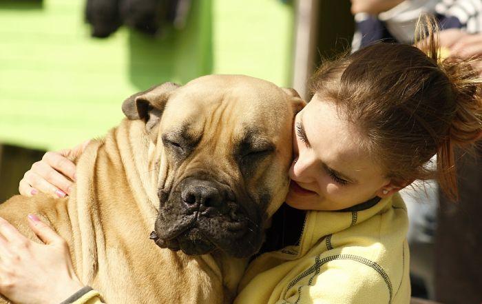 Naučnici: Veza između čoveka i psa moguća terapija protiv šizofrenije