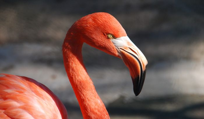 Tri dečaka na smrt kamenovala i pretukla flaminga u zoo vrtu