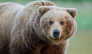 Medved provalio u auto i pojeo sve kolače